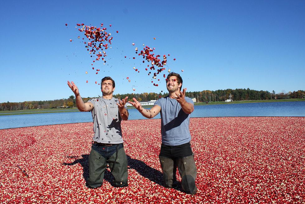 Cranes Cide - Cranberry Harvest