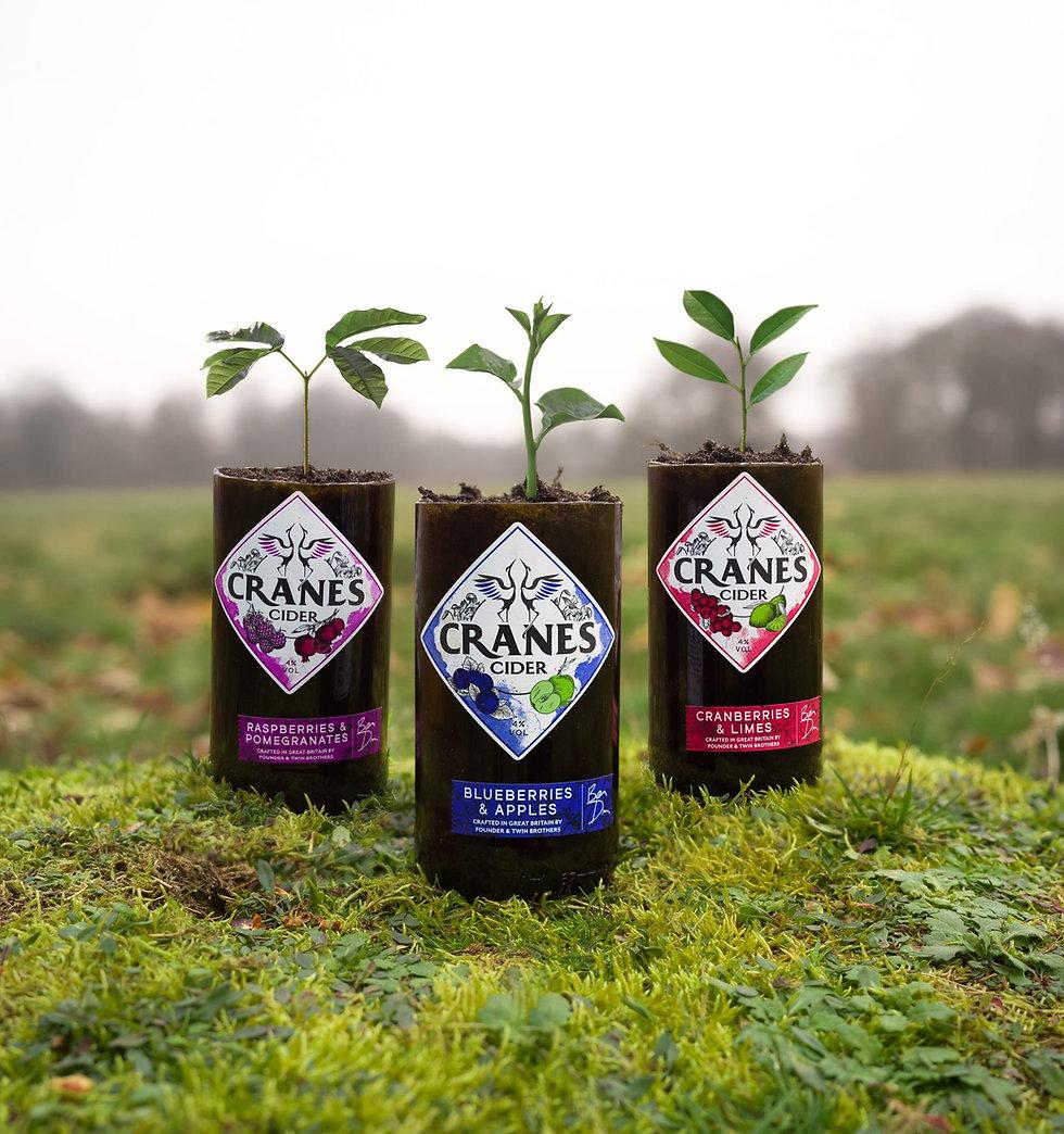 Cranes Cider - Tree Planting