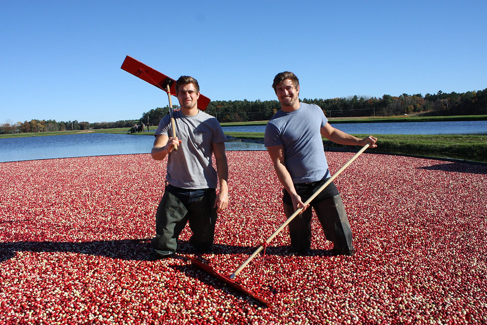 Handcrafted Cranes Cranberry Gin