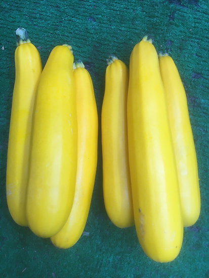 Yellow Courgette £1.49 Each