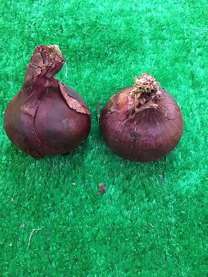 Red Onions (x2) - 59p