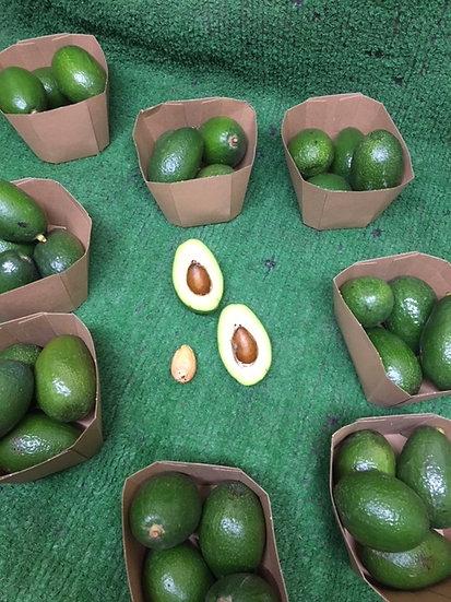 Avocado (x4) £2