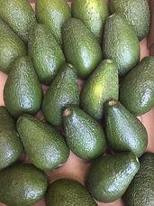 Avocado -£1.25 Each