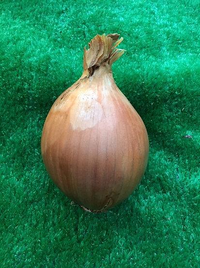 Spanish Onion - 59p