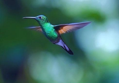 hummingbird-2139278_edited_edited_edited.jpg