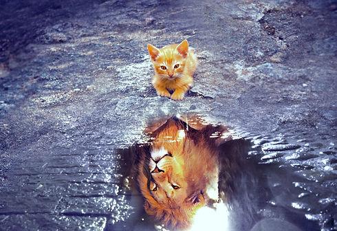 cat-3809563_edited.jpg