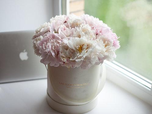 цветы в коробке пионы