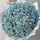 голубая гипсофила