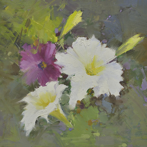 16x16 oil painting of petunia flowers white and purple 22010507
