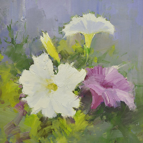 16x16 oil painting of petunia flowers white and purple 22010508
