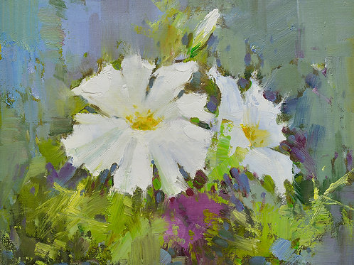 12x16 oil painting on canvas of white petunia flowers 22010535