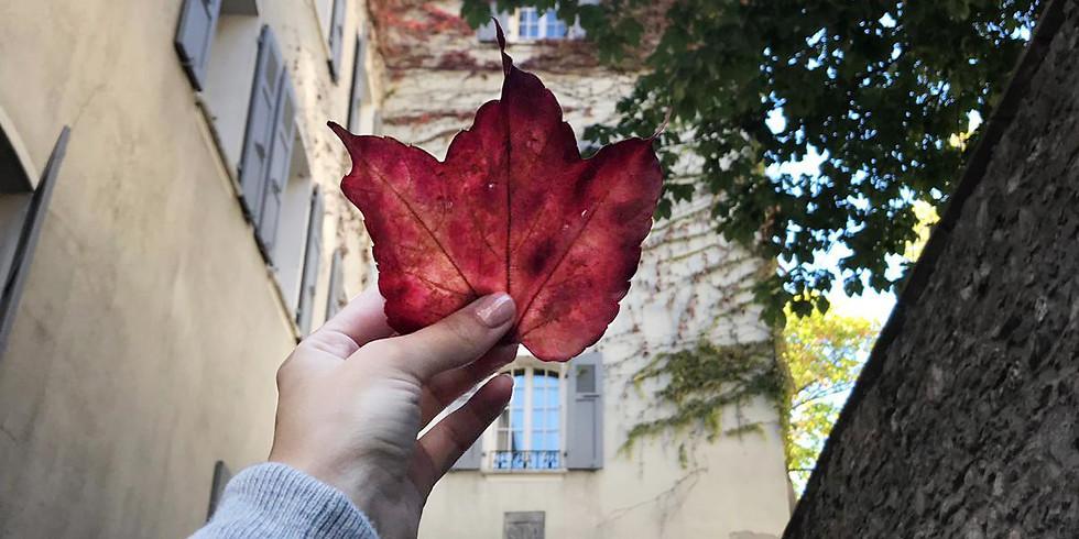 Après-midi photo d'automne