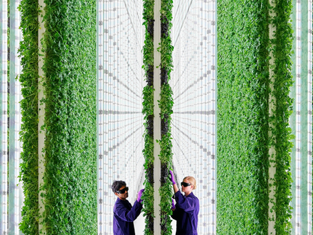 Is this the moment vertical farms take off?