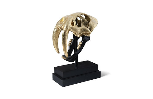Gold Saber Tooth Tiger Scull