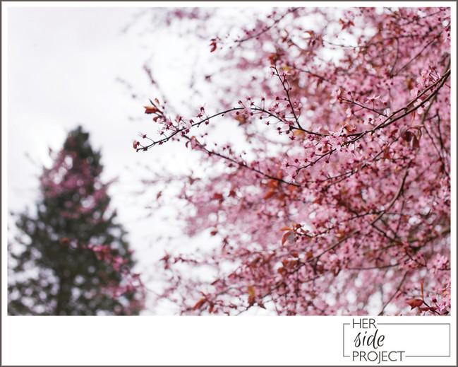 Seattle in Bloom
