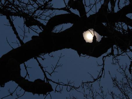Wie Bäume auf den Mond reagieren