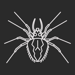 Spiders & Centipedes