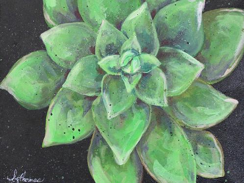 Night Succulent (Brenda Thomas)