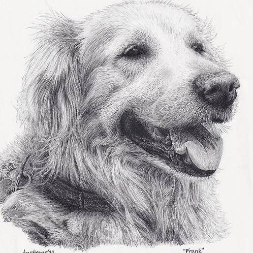 Pet Portrait Commissions! (Prices Vary)