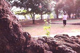 IMG_3704_woman_flower_tree.jpg