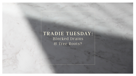 Tradie Tuesday: Blocked Drains & Tree Roots?
