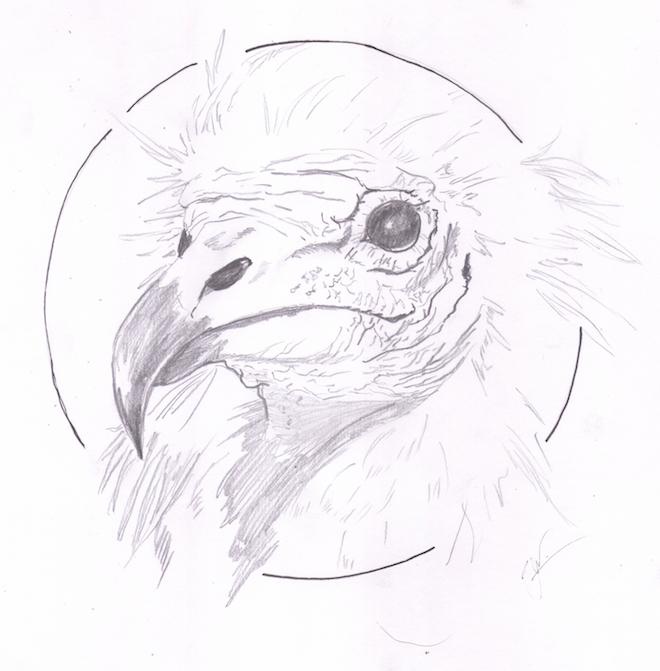 Cap X - O Pássaro Roca