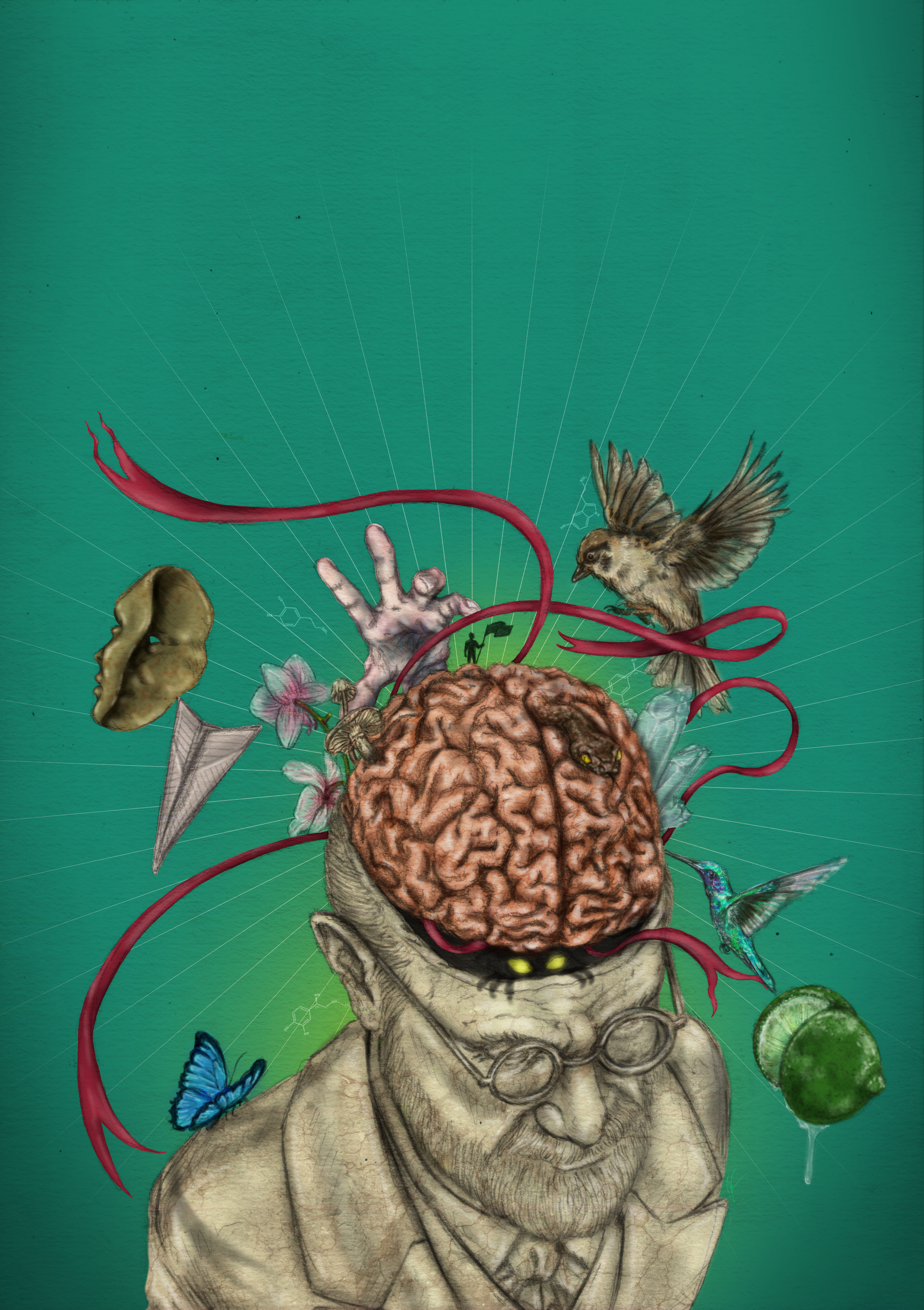 Capa O Cérebro e as Emoções