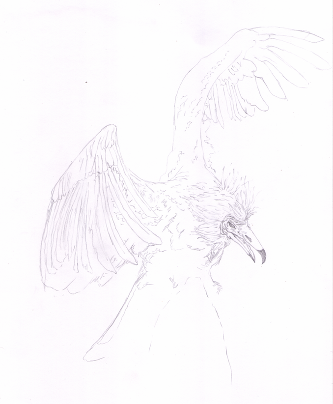 Pássaro Roca