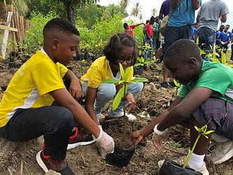 Mangrove planting in Grenada (c) TNC Marcos Lopez.jpeg