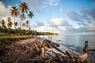 Grenville shoreline erosion people trees by marjo aho GND_needs TNC Comms permission befor