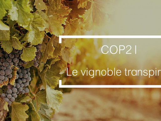 COP 21 : Le vignoble transpire