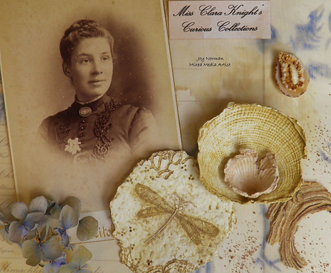 seashore specimens header.png
