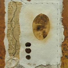 Specimen Series (ii) Honesty Seed Case.