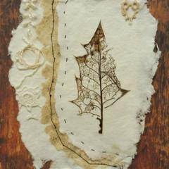 Specimen Series (iii) Holly leaf