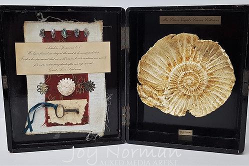 Seashore Specimens (v)