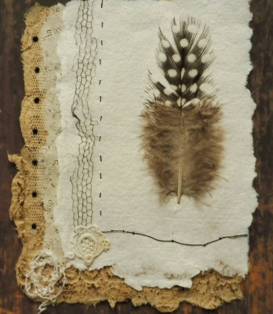 Specimen Series (iv) Spotted Feather