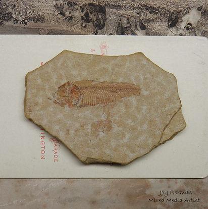 MCKCC Story SS. Fish Fossil. LOGO.JPG