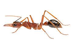 Residential Pest Control, Pest Control Gold Coast, Pest Control Brisbane, Pest Control Logan, Affordable Pest Control