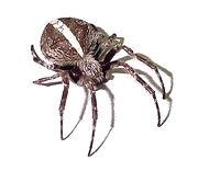 Residential Pest Control, Commercial Pest Control, Real Estate Pest Control, Pest Control Gold Coast, Pest Control Brisbane, Pest Control Logan, Affordable Pest Control