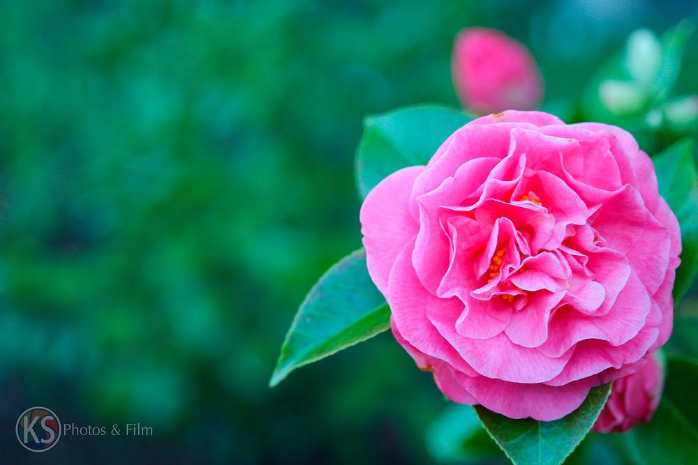 PinkFlower_8339.jpg