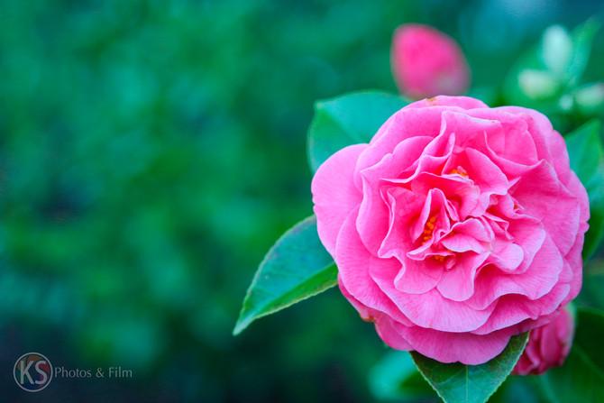 Flower Galore