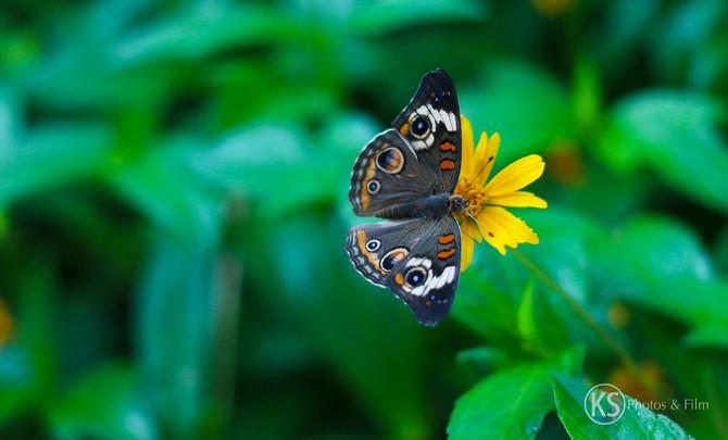 Butterfly Gardens in Arizona