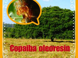 Copaiba - A healing powerhouse