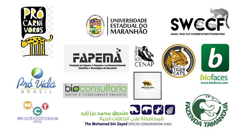 LogosWildCatsBrazil.jpg