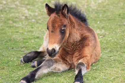 Foal 1.jpg