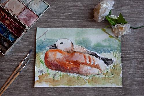 Original Art - Watercolour - Duck