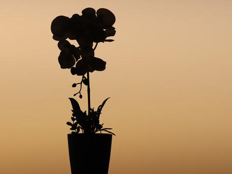 Faded blooms.jpg