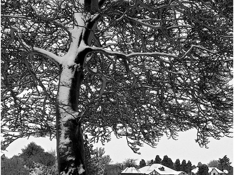 The Tree in Winter