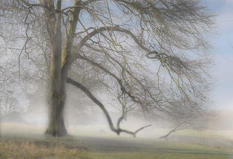 LPSC 2nd - Misty Morning at Holkham