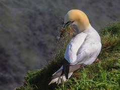 Gardening Gannet